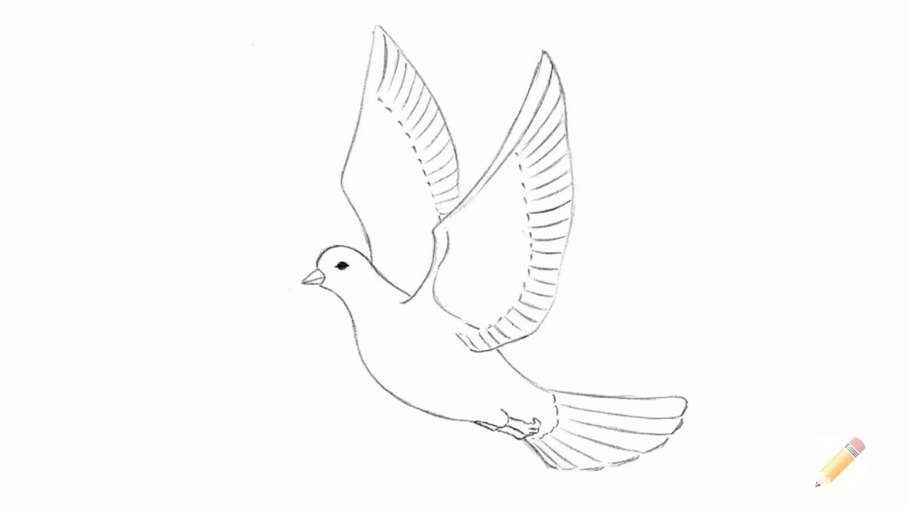 how to draw a dove pencil simple