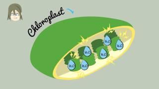 Wie funktioniert Fotosynthese? Fotosynthese in unter 2 Minuten erklärt!