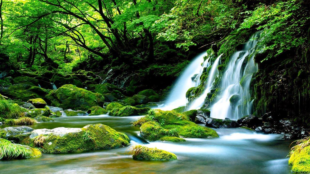 Download Morning Relaxing Music - Bird Sounds, Water Sounds, Stress Relief, Sleep Music, Meditation Music