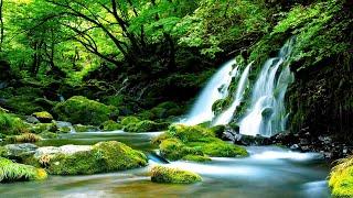 Morning Relaxing Music  Bird Sounds, Water Sounds, Stress Relief, Sleep Music, Meditation Music