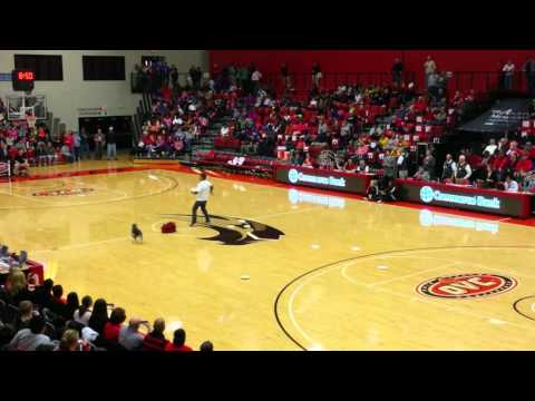 Blue Heeler Frisbee Act SIUE Basketball Halftime