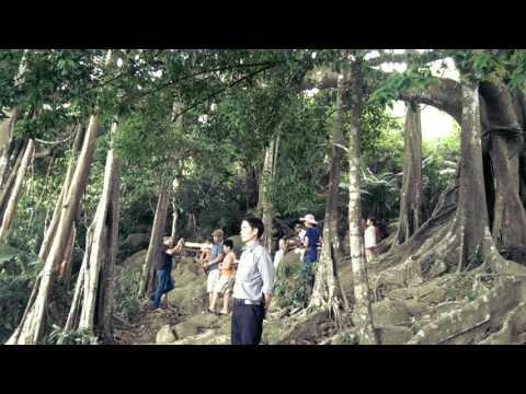 Van Son Du Lich Da Nang