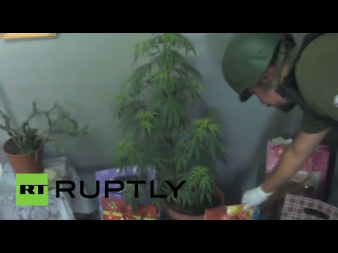 Merry-juana Christmas: Holiday hash tree seized by Chilean cops