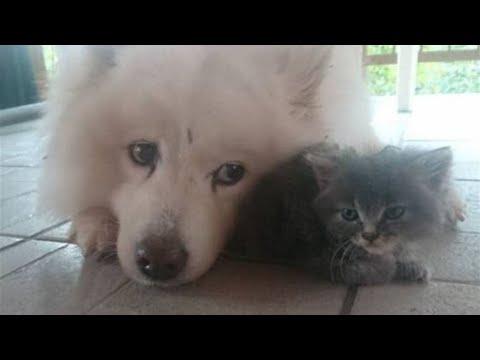 Серый комочек так бы и пропал на улице, но пес его нашел и спас