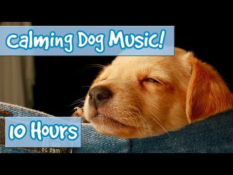 How to Relax Your Dog! Calm Dogs and Puppies Down with Sooth