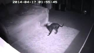 Чем занимаются кошки ночью? Часть2