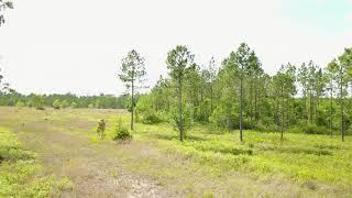 CR 121 50 Acres VIDEO 03