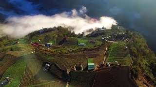 An interview of taiwan high mountain tea garden - Fushoushan Farm