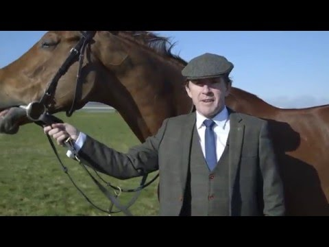 World's First Tweed Suit Designed For A Racing Horse Ahead Of Cheltenham 2016