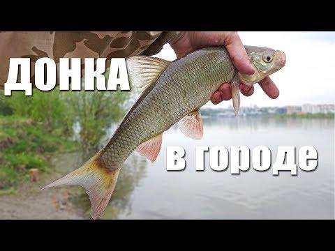 Ловля на донку с кормушкой с берега | Рыбалка с FishingSib 2018