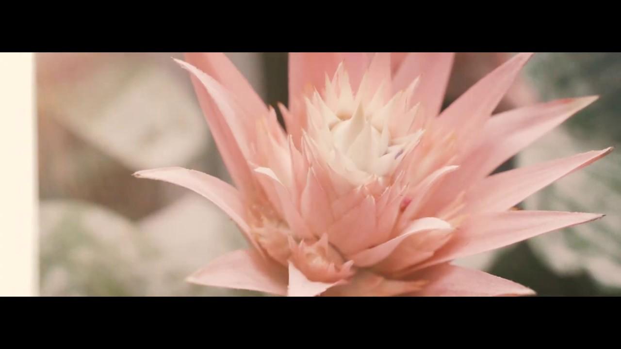 K-rauta lilled 2