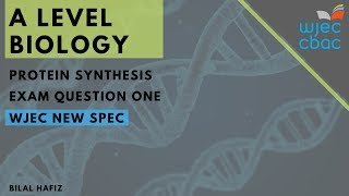 WJEC A Level Biology: Protein Synthesis - Q1 (A Level New Spec 2019)