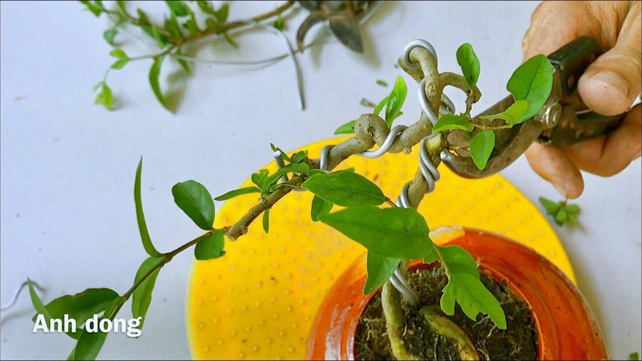 Cách làm bonsai mini không tốn tiền
