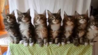 Ржачные кошки.