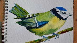 Step-by-step watercolour tutorial. How to paint a blue tit with just a few supplies.