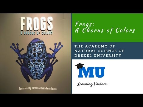 Frogs: A Chorus of Colors at The Academy of Natural Sciences of Drexel University