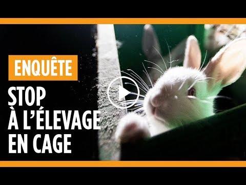 Nueil-les-Aubiers : un élevage intensif de lapins dénoncé par l'association L214 - - France 3 Nouvelle-Aquitaine