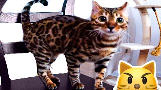 Funny cats compilation!