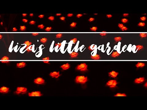 Liza's Little Garden feat ABS-CBN! - 2000 Red Roses HAHA