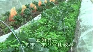 Repeat youtube video 空海法師-自然農法實務採訪錄5/5(遠古農莊)
