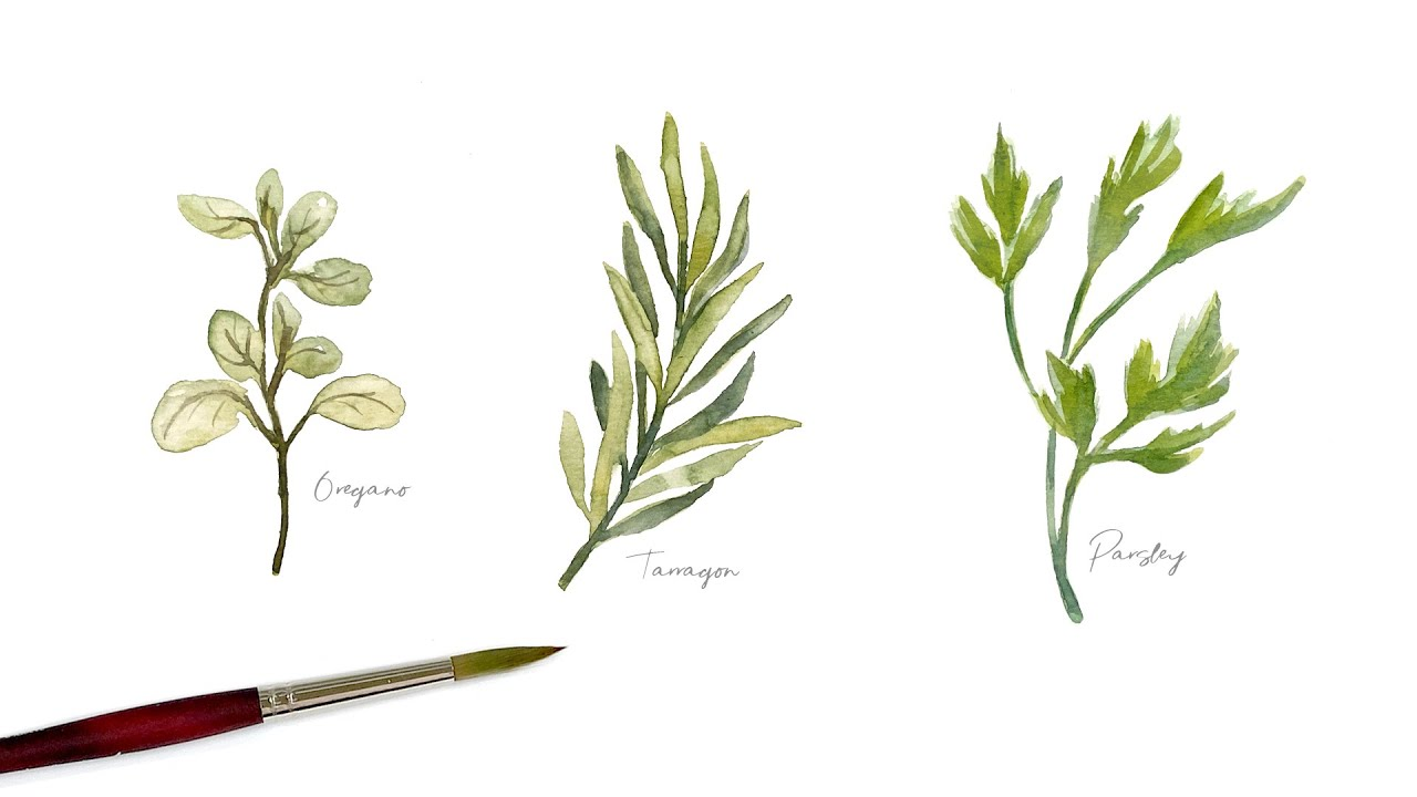 How to paint Watercolor Herbs - Oregano, Tarragon, Parsley