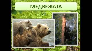 презентация на тему дикие животные для детского сада