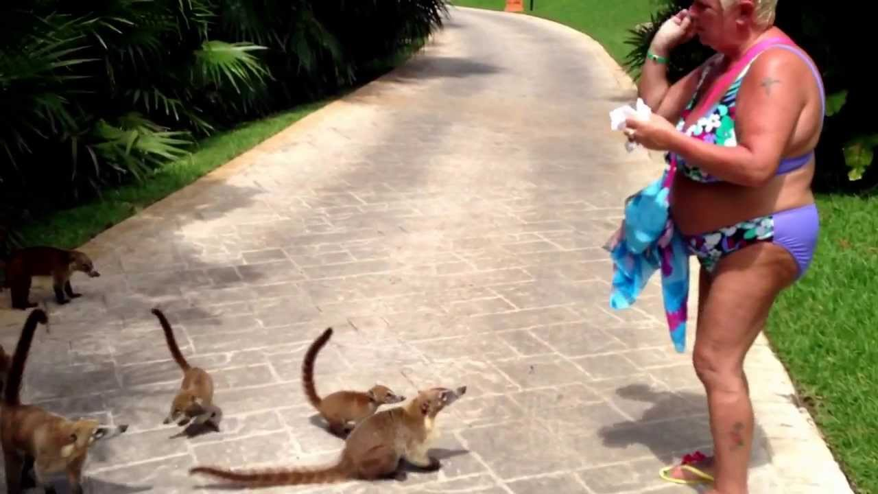 Animaux dans l'hotel - Picture of Grand Bahia Principe ... |Grand Bahia Principe Tulum Animals