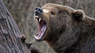 Lov na Medveda 2014 - Bear Hunting - mpeg2video