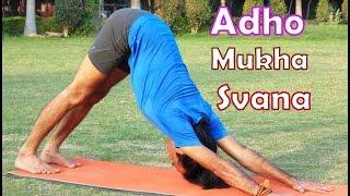 Adho Mukha Svanasana | Downward Facing Dog Pose | 2 Minutes Full Body Stretch Yoga Health