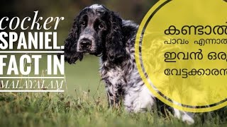 Cocker spaniel fact in MALAYALAM 2020