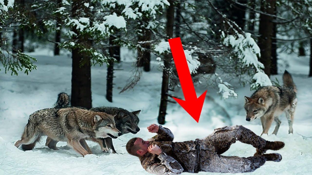 Стая голодных волков окружила меня со всех сторон, но это было еще не все -  YouTube