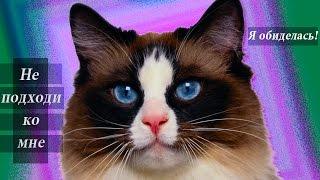 """""""Я обиделась"""" -не трогайте кота до 6 вечера"""