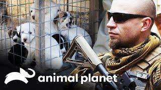 Resgate de filhotes no Afeganistão | Dodo Heroes: Resgate sem fronteiras | Animal Planet Brasil