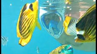 Снорклинг Easybreath лучшая маска для отдыха на море. Tribord Обзор маска для плавания