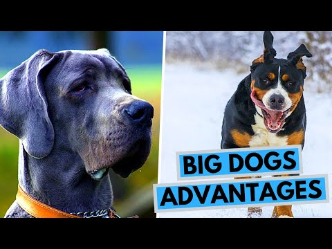 TOP 10 Advantages of Owning a Big Dog