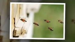 Bee Control | Fountain Hills, AZ – Cummings Termite & Pest Control
