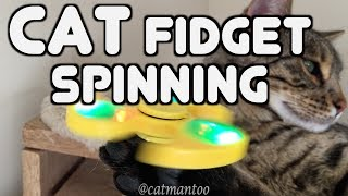 CAT Fidget Spinning is Here