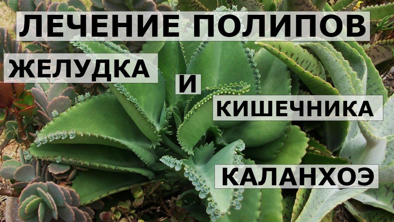Масло черного тмина baraka в интернет-магазине biomui по отличной цене!. Предлагаем купить натуральное масло черного тмина недорого!