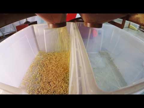 19 сен 2017. ᐉ купить ядро кедрового ореха масло на экспорт возможно с. ᐉ крупные партии до: томск абакан красноярск край барнаул.