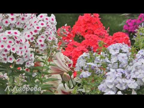 видео: Чудо-сад своими руками.