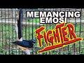 Masteran Murai Batu Memancing Emosi Fighter Gacor Seketika Shama Bird  Mp3 - Mp4 Download
