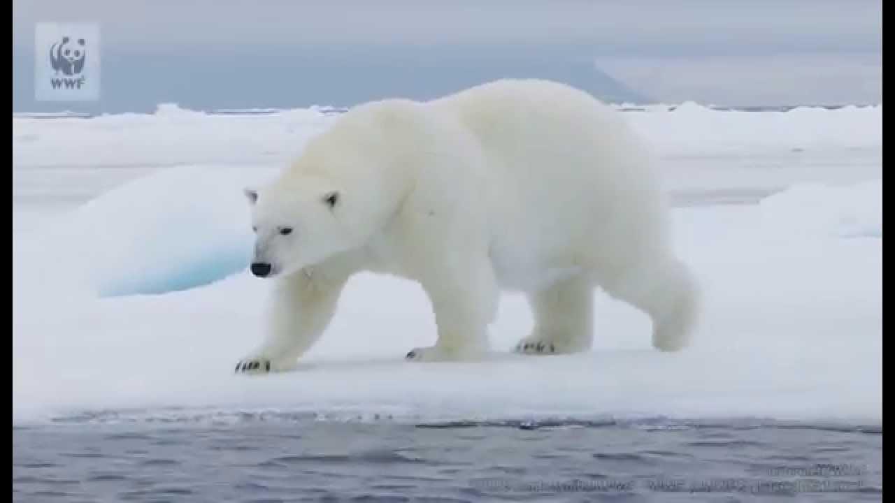 化 現状 温暖 地球