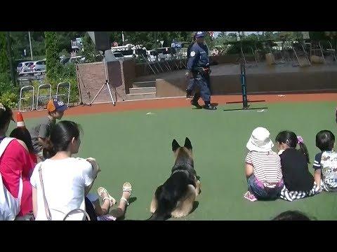 千葉県警柏警察署 警察相談の日イベント2017 Part2(警察犬の演技)