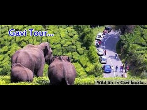 Gavi Safari