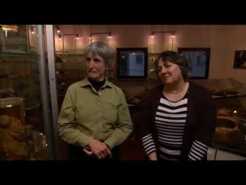 Who are Rosi Braidotti and Donna Haraway?