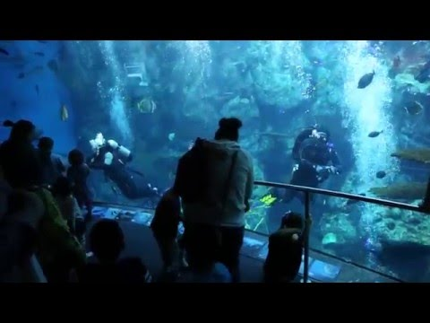 Acuario De Long Beach Ca Aquarium Of The Pacific You