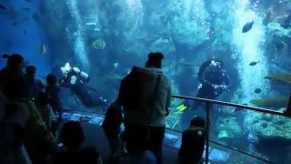 Acuario de Long Beach Ca - Aquarium of the Pacific
