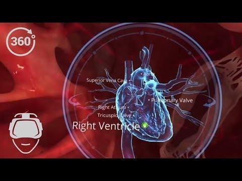 VR 360 Human Body : Circulatory System | Virtual Reality | Biology | VR in School