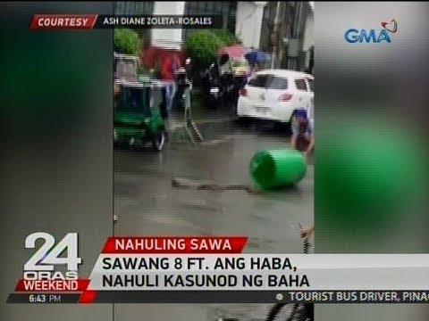 24 Oras: Sawang 8 ft. ang haba, nahuli kasunod ng baha