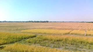 Trip To Mahur (Part-6) : Where the sky kisses the earth and the gold lies on the ground......
